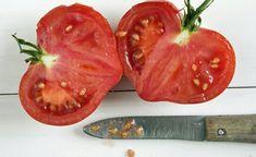 Jetzt im Herbst können Sie die letzten ausgereiften Tomaten nutzen, um eigenes Saatgut zu ernten. Hier zeigen wir Ihnen, wie man das macht.