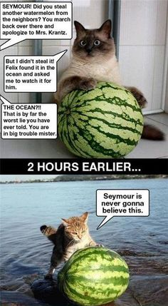 Another watermelon