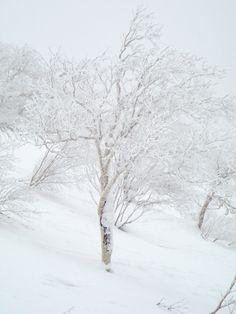 Niseko winter wonderland Japan swooosh