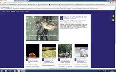"""Para mantener las Actividades de la Asociación para la Promoción de los Océanos es necesario que se realicen regularmente contribuciones económicas por parte del público en general y empresas,   relacionados con el mar,  por tanto les ruego que si deséan realizar algún ingreso lo efectúen en el nº de cuenta: 2038 1001 38 6001276269 sito en la entidad """"Bankia"""". 20/04/16 19:52 Actualización Blog """"La Caracola"""" (Aprocean) http://aprocean.blogspot.com.es/?view=magazine"""