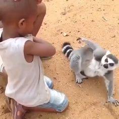 pet world cute funny animals, funny animal videos, cu Funny Animal Memes, Funny Animal Pictures, Funny Dogs, Cute Dogs, Animal Humor, Baby Pictures, Funny Memes, Cute Little Animals, Cute Funny Animals