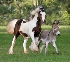 What a lovely picture! All animals should be that free and happy! ❤️ ~ Ariane Vanner Foal and a miniature Donkey.