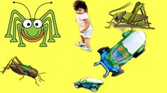 Bug Racers Toy Review | Insect Toys with Live Crickets that Drive Around...