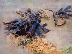 seaweed painting - Google-søgning