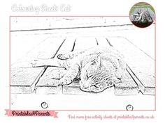 Here's a free printable Cat colouring sheet for your children, featuring original Printables4Parents photography.