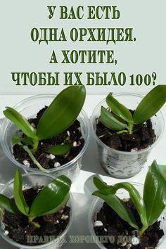 Growing Vegetables Indoors, Easy Vegetables To Grow, Growing Herbs, Organic Gardening, Gardening Tips, Orchid Varieties, Smart Garden, Orchids Garden, Potted Trees