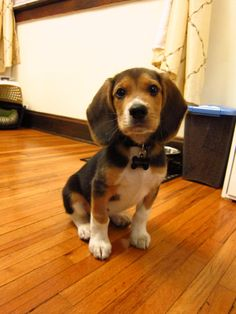No, all beagles are NOT named Snoopy.