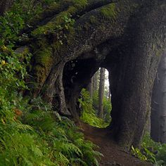 Hike the Elk Flats trail to Devils Cauldron at Oswald West State Park. Travel Oregon's very good guide to hiking on the Oregon coast.
