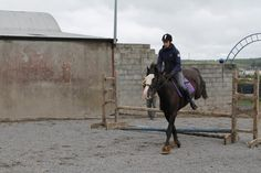 Valerie schooling Jazz over some poles. He has just started his jumping career. #loveirishhorses #horseforsale Email coopershillequine@gmail.com for more information.