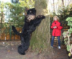 "Kennel of Black Russian Terrier ""Zolotoy Grad"" - Photo gallery"