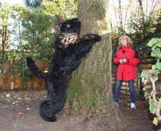 "Kennel of Black Russian Terrier ""Zolotoy Grad"" - Photo gallery"