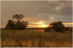 Polentswa,Kgalagadi Transfrontier Park