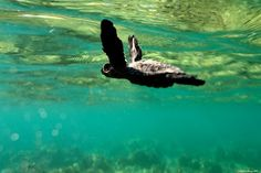 swimming with turtles/tortoises :)