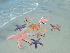 Beach Aesthetic, Summer Aesthetic, Summer Dream, Summer Girls, Summer Beach, Key West, Florida Kilos, No Ordinary Girl, Coconut Dream