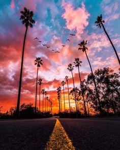 Birds flying above a stretch of road Yoga Lyon, Los Angeles Travel, Instagram Users, Instagram Posts, Golden Dog, Paris