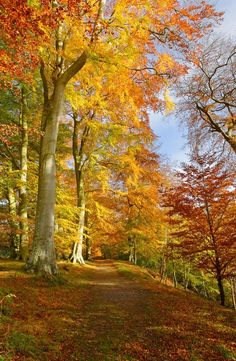 Allen Banks, Northumberland print on canvas - photography by Roger Clegg Landscape Photography, Nature Photography, Autumn Scenes, Nature Tree, Autumn Nature, Autumn Forest, Autumn Leaves, Fall Pictures, Belle Photo