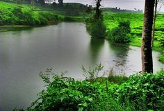 a small lake around tea plantation, ciwidey, west java