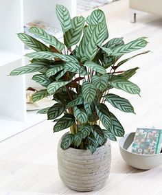Buy Green House Plants online   Bakker.com