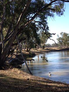 Murray river Swan Hill beautiful