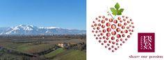 Cantina Frentana presenta i nuovi vini con i piatti di Villa Majella - L'Abruzzo è servito   Quotidiano di ricette e notizie d'AbruzzoL'Abruzzo è servito   Quotidiano di ricette e notizie d'Abruzzo