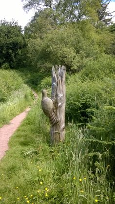 Woodpecker sculpture near Rockcliffe in Dumfries and Galloway. June 2014.  B