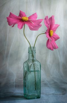 Mandy Disher  Cosmos