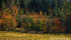 Galeria fotograficzna Tatry – Jesienny Regiel ...
