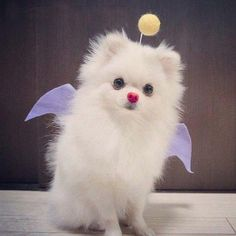 Small white dog dressed like the character Mog from Final Fantasy. #DogCostume #HalloweenDogs #Halloween