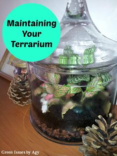 Green Issues by Agy: Maintaining Your Terrarium