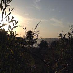 Nature and sunsets #porto #beautifullight #plants #solitarysociety