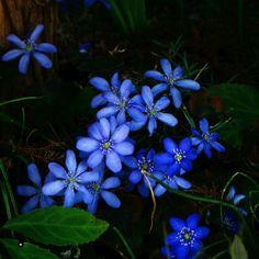 sparkling blue flowers