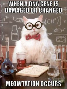 New science jokes puns chemistry cat ideas Crossfit Memes, Crossfit Motivation, Crossfit Gym, Science Cat, Science Puns, Science Comics, Science Quotes, Chemistry Cat, Chemistry Teacher