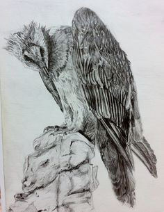 Lammergeier Vulture, by Ged Peter Lynn of Slakewater Creative