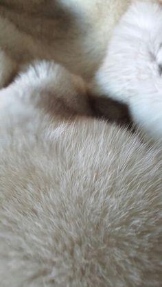 23 Best Blanket images in 2017 | Fur blanket, Fur, Blanket