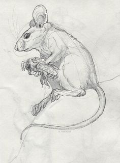 ~nyello~ — rowkey: Some quick mouse form/anatomy practice-. Pencil Drawings Of Animals, Animal Sketches, Drawing Sketches, Drawing Ideas, Drawing Animals, Drawing Tips, Lion Head Drawing, Drawing Hair, Drawing Faces