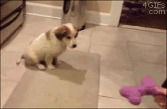 New Funny gifs (10:42:05 AM, Friday 28, October 2016 PDT) – 25 gifs