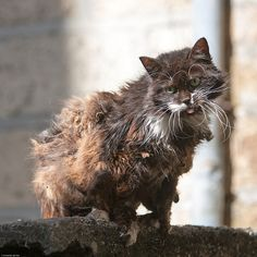 """""""If homeless cats could talk, they would probably say, give me shelter, food, companionship, and love, and I'll be yours for life."""" -- Susan Easterly      Please adopt."""