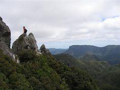 The Pinnacles Track - Kauaeranga Kauri Trail, Coromandel, NZ - One of NZ's finest Day Walks Moving To New Zealand, New Zealand Travel, Travel Reviews, Walk Past, Walks, Trail, Mountains, Nature, Naturaleza