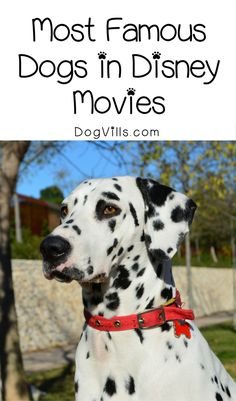 These are by far the five most famous dogs in Disney movies (not counting Pluto and Goofy)! How many of these flicks have you seen!