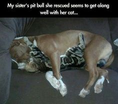 33 Terrifyingly Adorable Pit Bulls #32 just tugs at the old heart strings, so sweet!
