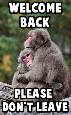 You can put free images of welcome back memes on your wa status or share them with your close friends.  #meme #animalmeme #monkeymeme #welcomeback #funnypicture #bestfunnypicture #veryfunnypicture Welcome Back Meme, Today Meme, Welcome Images, Very Funny Pictures, Dont Leave, Close Friends, Animal Memes, Free Images, Animals
