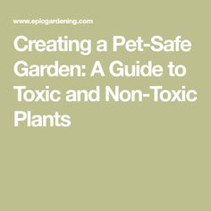 We love to have a great home for our pets, but some plants can be extremely dangerous or fatal to our pets. Learn how to create a pet-safe garden and which plants to avoid with our thorough guide! Healthy Environment, Pet Safe, Dog Stuff, Your Pet, Badass, Gardening, Pets, Create, Garten