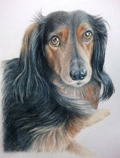 Custom Pet Portrait 8 x 10 Colored Pencil Art by by CarlaKurtArt, $115.00