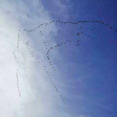 Chris at @BikeHireDirectFrance Charente Maritime spotted hundreds of #cranes flying over the #CharenteMaritime making their way south for winter !  Dont worry - we are not going anywhere... #BikeHireDirect can deliver #bikes directly to your all year round! For more information visit the link in our bio :-)  #NouvelleAquitaine #France #DispoVelo #French #Charente #Gironde #HauteVienne #var #Vienne #Dordogne #Vendee Aquitaine, Crane, French, Link, Winter, Winter Time, French People, French Language, France