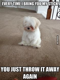 Sad Shih Tzu You Just Throw Away the Stick Again - Jax - Puppies Animal Captions, Funny Animal Memes, Cute Funny Animals, Funny Animal Pictures, Dog Memes, Perro Shih Tzu, Shih Tzu Hund, Shih Tzu Puppy, Shih Tzus