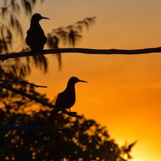 Oh life.  Thank you for your beauty. Thank you for reminding me how lucky we are to be part of something so big.  Tyler Knott Gregson   _____  White-capped Noddies making beautiful silhouettes against the setting sun   _____  #ladyelliotisland #greatbarrierreef #southerngreatbarrierreef #visitfrasercoast #ocean #gbrmarinepark #mermaid #mermaidlife #happiness #gratitude #waterlust #bird #birdlover #instagood #instadaily #ig_australia #queensland #visitqueensland #seeaustralia #love #nature…
