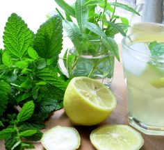 Old Fashioned Lemon Balm and Lemon Verbena Lemonade Syrup - Lavender and Lovage Lemon Balm Recipes, Lemon Balm Uses, Syrup Recipes, Triple Sec, Mojito, Orange Juice Cocktails, Flavored Lemonade, Gin, Simple Syrup