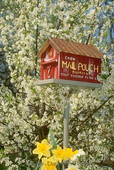 Handmade red barn birdhouse painted as a tobacco barn or roadside stand in a tree of blooming pear in spring