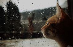 https://flic.kr/p/r9G67J | It´s raining....