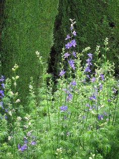 Garden flowers, the Alhambra-Ivera